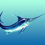 pesce-Spada-Disegno